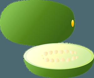 Winter melon clipart