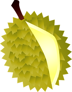 Durian fruits clipart