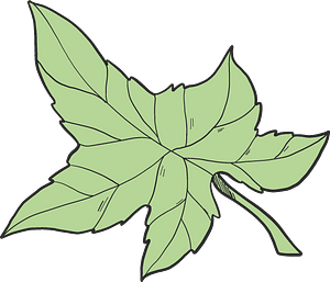 Ivy leaf clipart