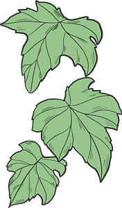 Ivy leaves clipart