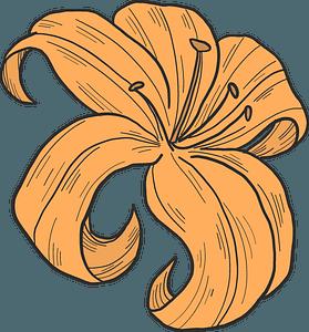 Orange lily clipart