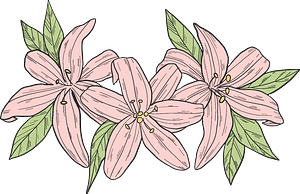 Pink lilies clipart