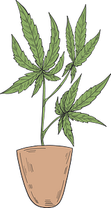 Marijuana in a pot clipart