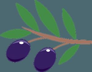 Olive branch кліпарт