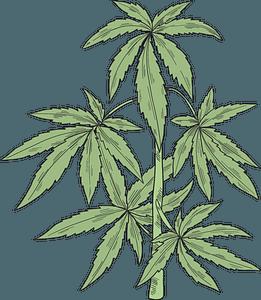 Marijuana plant clipart