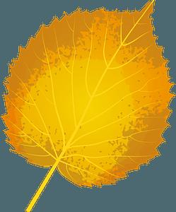 Handkerchief tree autumn leaf clipart