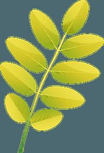 Pagoda tree autumn leaf clipart