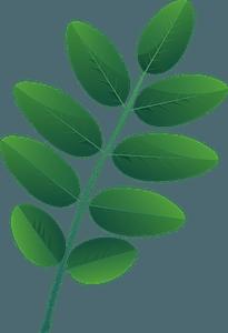 Pagoda tree spring leaf clipart