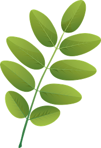Pagoda tree summer leaf clipart