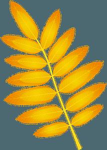 American mountain ash autumn leaf clipart