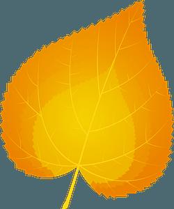 Common lime autumn leaf clipart