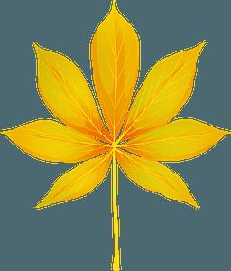 California buckeye autumn leaf clipart