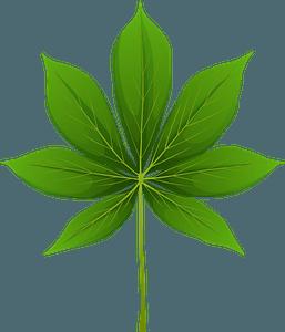 California buckeye spring leaf clipart