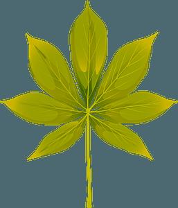 California buckeye summer leaf clipart