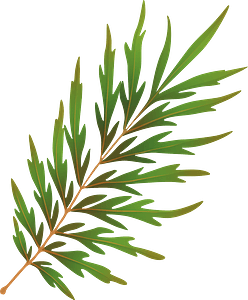 Silky oak summer leaf clipart