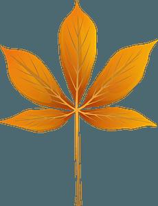 Yellow buckeye autumn leaf clipart