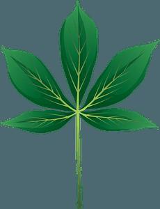 Yellow buckeye spring leaf clipart
