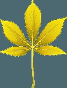 Yellow buckeye summer leaf clipart