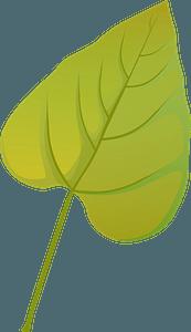 Southern catalpa autumn leaf clipart