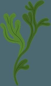 Seaweedのクリップアート