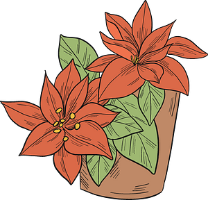 Poinsettia in a pot clipart