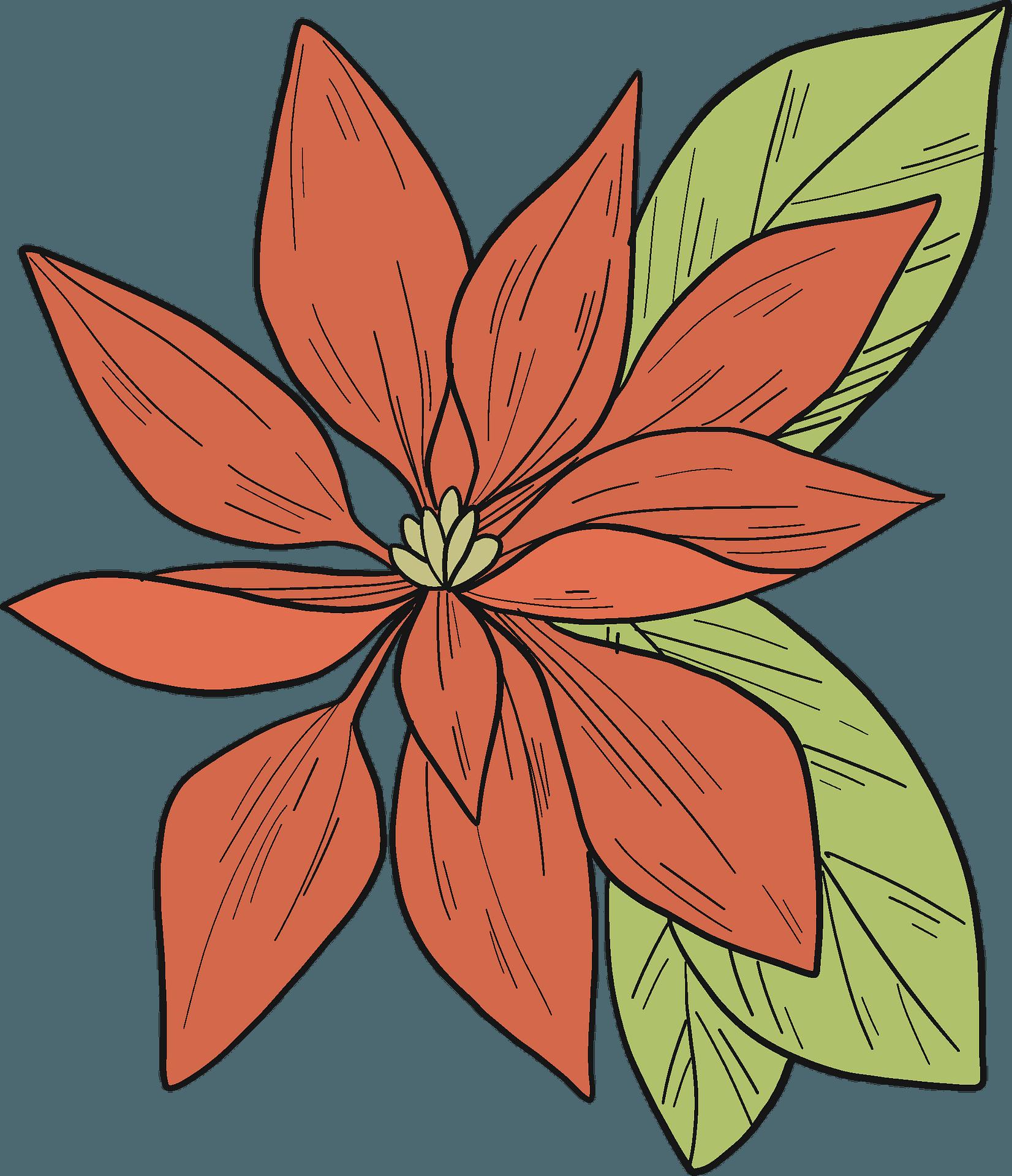Christmas Poinsettia Clipart png download - 600*581 - Free Transparent  Santa Claus png Download. - CleanPNG / KissPNG