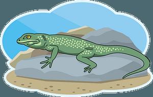 Lizard 클립 아트