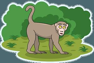 Monkey 클립 아트