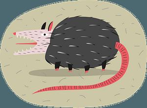 Possum 클립 아트