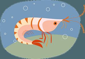 Shrimp 클립 아트