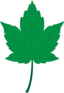Sycamore leaf clipart
