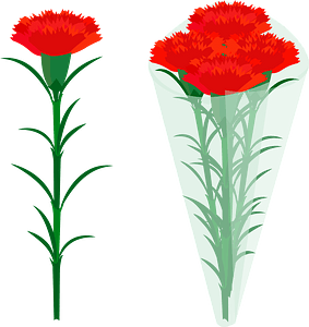 Red Carnation Flowers clipart