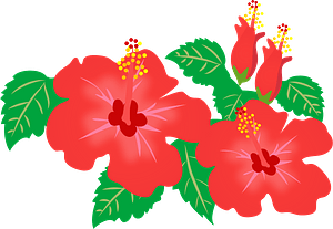 Red Hibiscus Flowers clipart