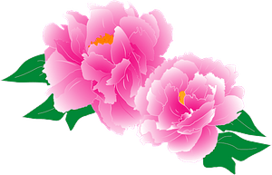Pink Peony flowers clipart