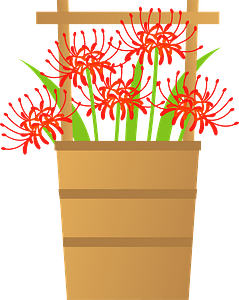 Red spider lily flower clipart