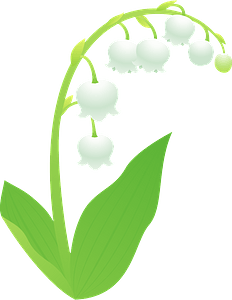 Lily of the valley flower clipart