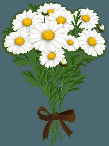 Marguerite bouquet clipart