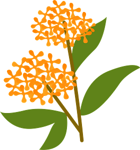 Sweet osmanthus clipart