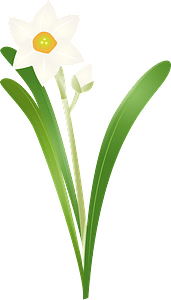 Narcissus flower clipart