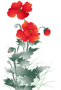 Poppy flower clipart