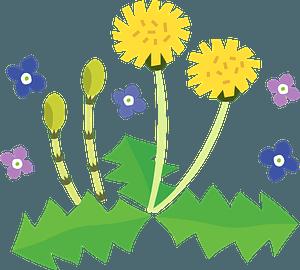 Dandelion fertile shoots clipart