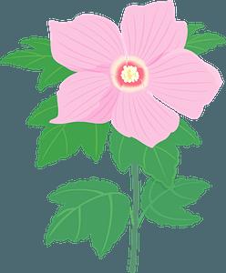 Hibiscus syriacus flower clipart