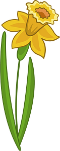 Daffodil clipart