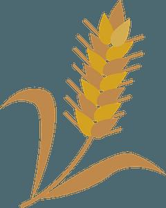 Wheat cereal grain clipart