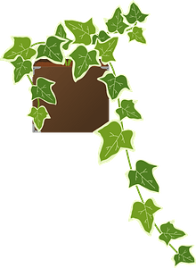 Ivy houseplant clipart