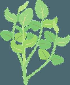 Watercress plant clipart