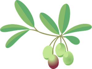 Olive plant clipart