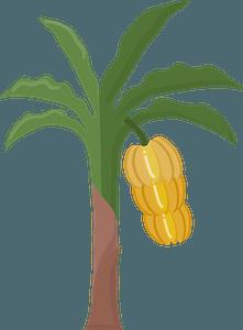 Banana treeのクリップアート