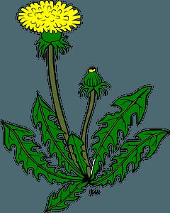 Dandelion on the Stem clipart