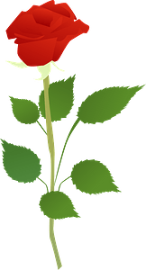 Red Rose on the Stem clipart